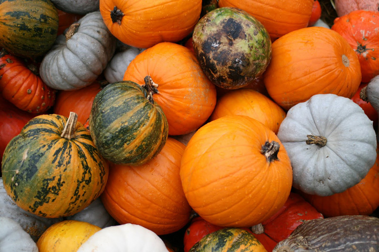 Kidney Diet Tips: Pumpkin and Kidney Diets